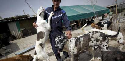 Iran dog lovers face 74 lashes, fines under new law